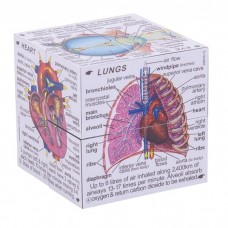 Zoobookoo Human Body Cube Book